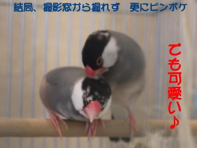 b0158061_21181767.jpg