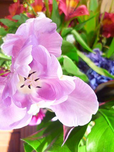 春立つ日 立春。・:*:・゚`☆。・:*:・゚`✛_a0053662_15423095.jpg