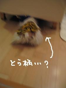 b0092580_3534263.jpg