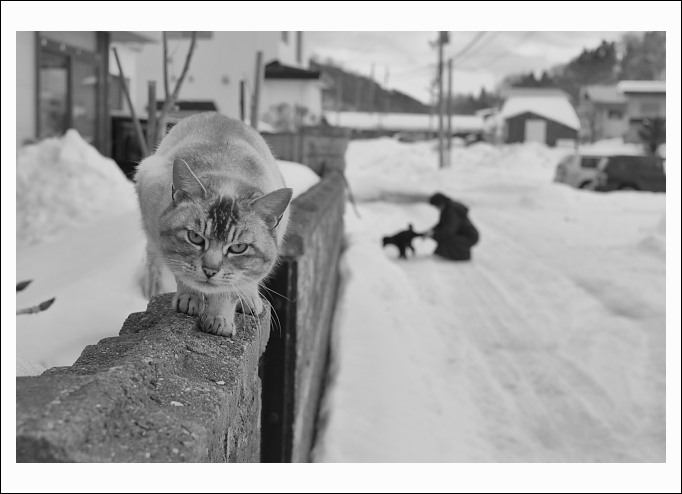 winter cat_c0170584_2029470.jpg