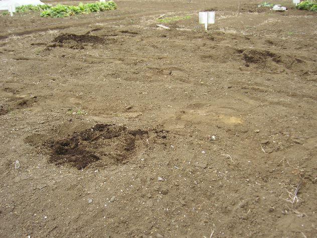 市民農園の片付けが完了しました_c0053863_16363142.jpg