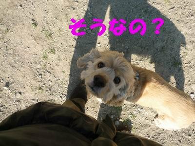 b0140680_1427365.jpg