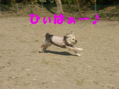 b0140680_1492837.jpg