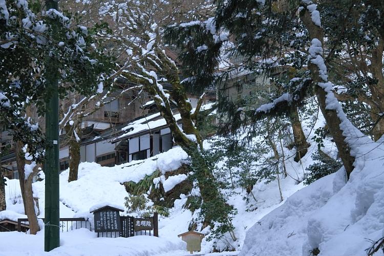 雪の志明院_e0051888_18285478.jpg
