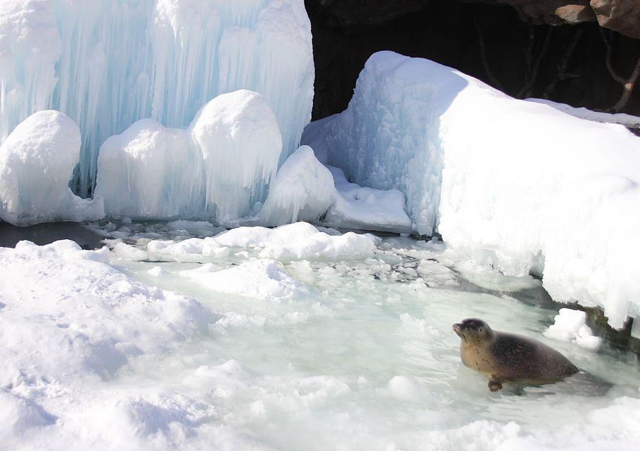 流氷ひろば_c0155902_17291537.jpg