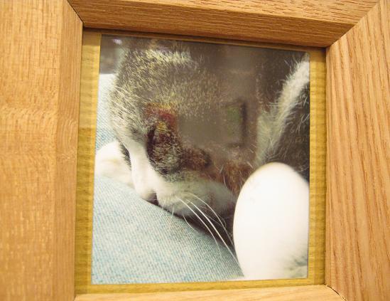 ☆15周年記念企画展「卵・TAMAGO・たまご」開催☆その4  _e0134502_14121665.jpg