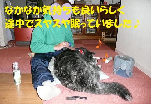 f0121712_953037.jpg