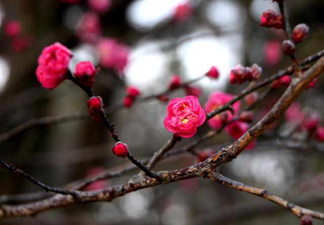 京都御苑 梅園 1_e0048413_21162935.jpg