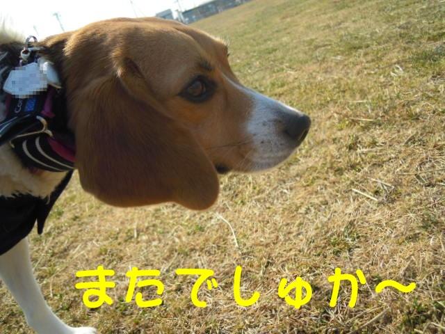 c0166622_14384119.jpg