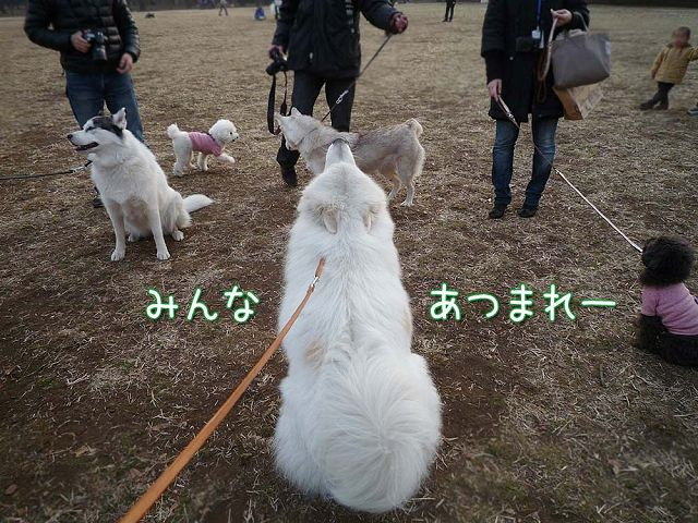 土曜だよ!おっきな公園♪_c0062832_1755396.jpg