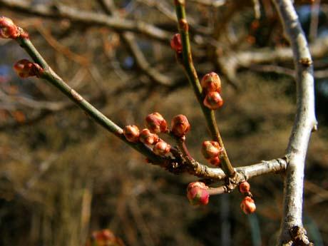 春が来た_d0127634_1355646.jpg