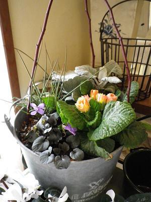 春近し・・・_e0086738_2353357.jpg