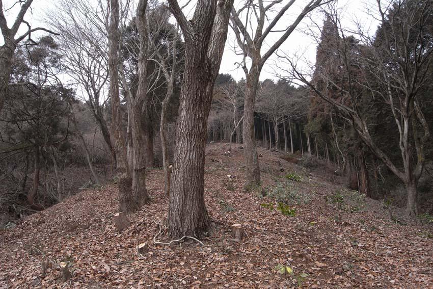 里山の開墾_f0030644_19471281.jpg