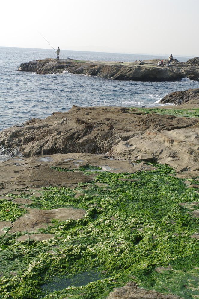 066 - 江ノ島のあおさ_f0183059_17291872.jpg