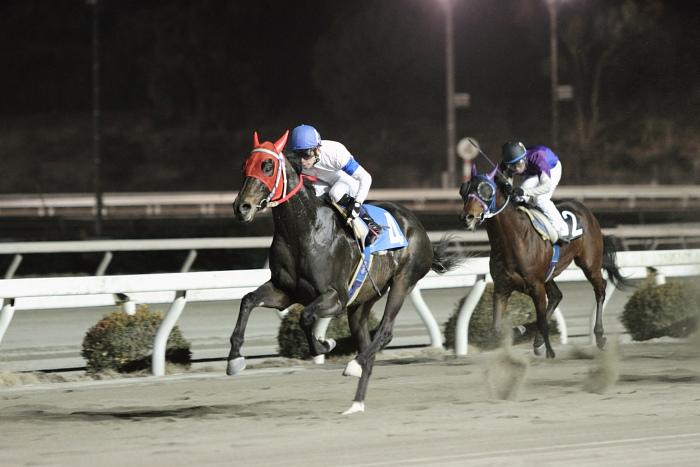 2011年2月4日(金) 高知競馬 6R C3-7 選抜馬_a0077663_18185220.jpg