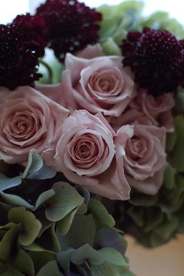 """Rose \""""Morning Dew\""""_f0057564_19565737.jpg"""