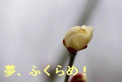 b0185771_2028562.jpg