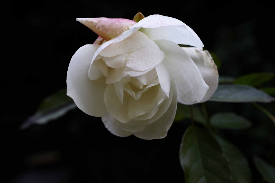 春を待つ草花たち_a0107574_2233761.jpg