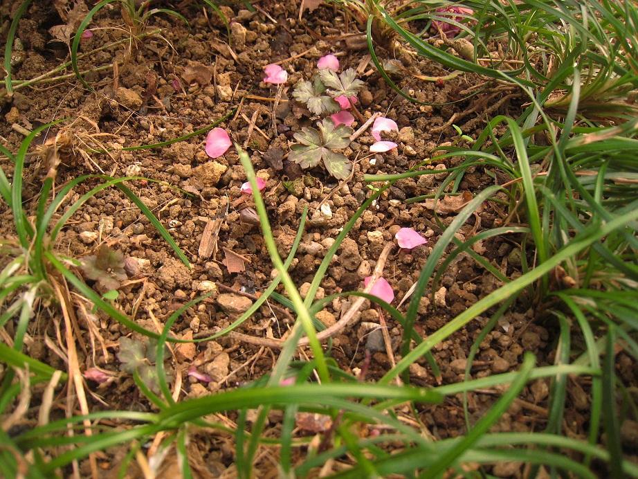 春を待つ草花たち_a0107574_224218.jpg