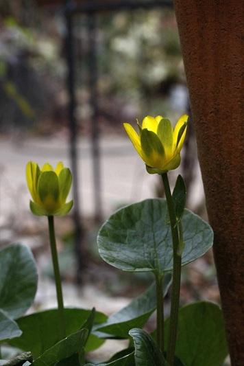 春を待つ草花たち_a0107574_22553113.jpg