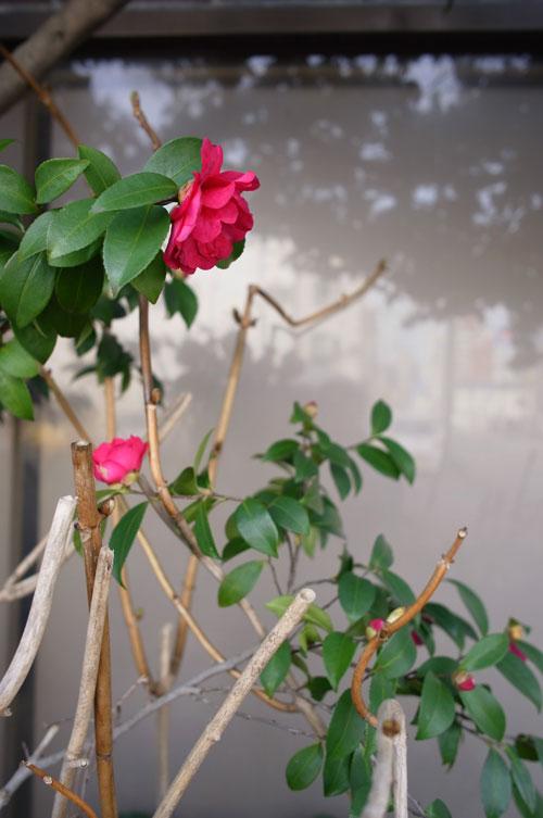 2月の花_e0082981_2328671.jpg