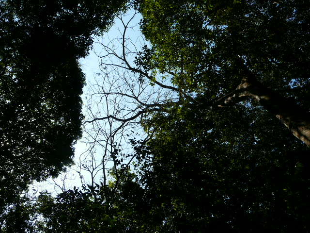 湘南・鷹取山_e0145782_15352954.jpg