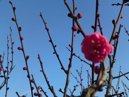春の気配…?_b0131012_9355839.jpg