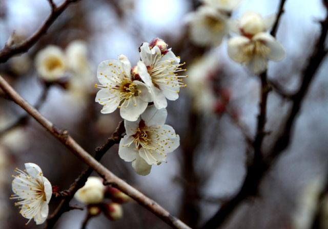 京都御苑 梅園 2_e0048413_18182837.jpg