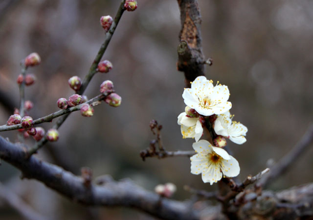 京都御苑 梅園 2_e0048413_18184123.jpg