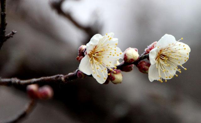 京都御苑 梅園 2_e0048413_18185519.jpg