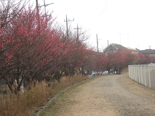 桜の花.....梅にメジロ!_b0137932_21172231.jpg