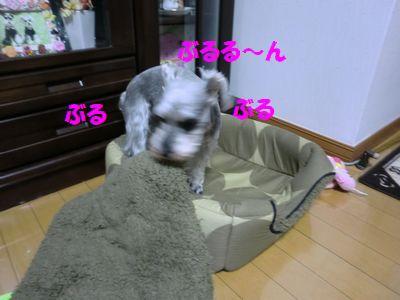 b0206444_16373370.jpg