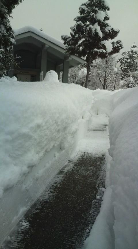 雪国便り_c0100949_014582.jpg
