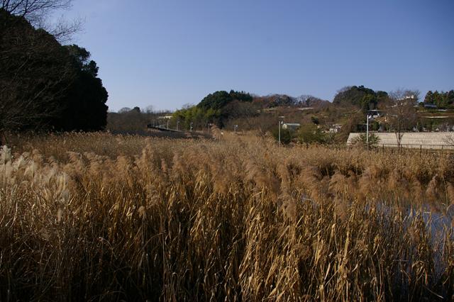 WAVOC公認所沢キャンパス湿地保全活動のご案内_a0186568_0242112.jpg