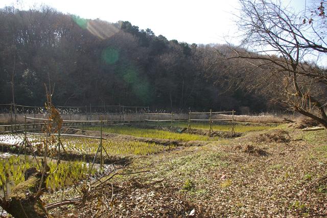 WAVOC公認所沢キャンパス湿地保全活動のご案内_a0186568_049561.jpg