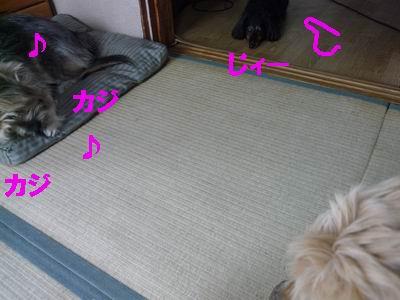 b0140680_0435243.jpg