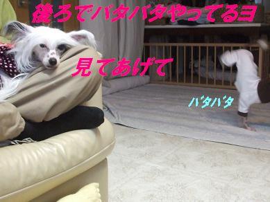 f0179203_9124077.jpg