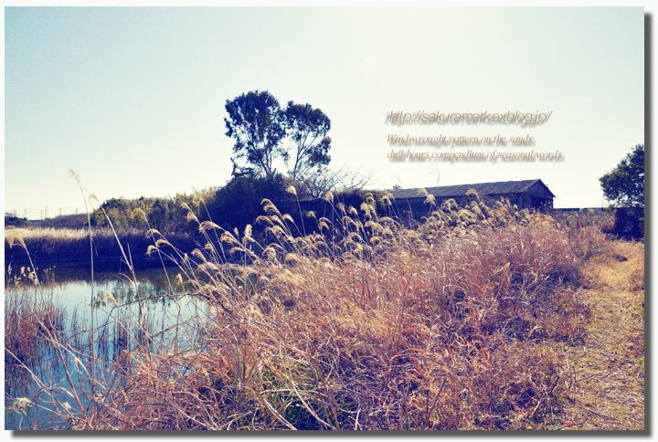 2011 冬の記憶 №10 ~M養鰻場跡地の廃屋小屋にて・・・~_f0235723_19152044.jpg