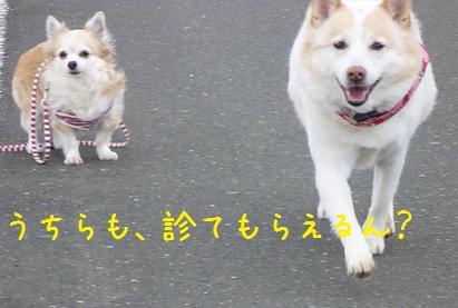 b0138430_20102295.jpg