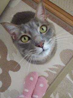 猫のお友だち ちぃちゃんあずきちゃんちょびくんまろくん編。_a0143140_14475266.jpg