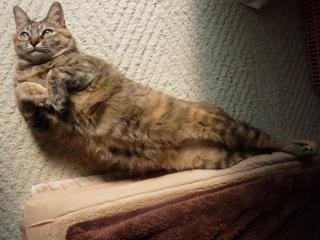 猫のお友だち ちぃちゃんあずきちゃんちょびくんまろくん編。_a0143140_14502887.jpg