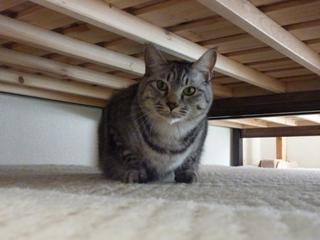 猫のお友だち ちぃちゃんあずきちゃんちょびくんまろくん編。_a0143140_14555734.jpg