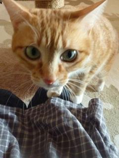 猫のお友だち ちぃちゃんあずきちゃんちょびくんまろくん編。_a0143140_1457150.jpg
