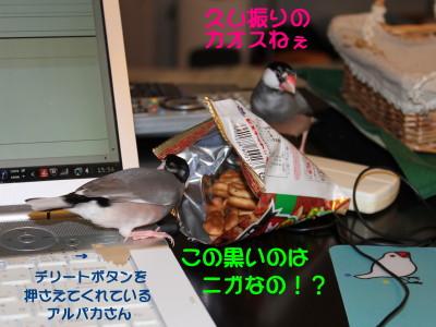 b0158061_21363199.jpg