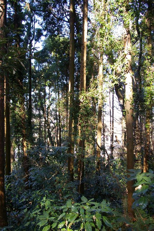 里山ってなんだ!」第3回「人工林と天然林」_c0014967_10224473.jpg