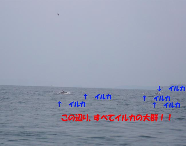 f0183484_9335230.jpg