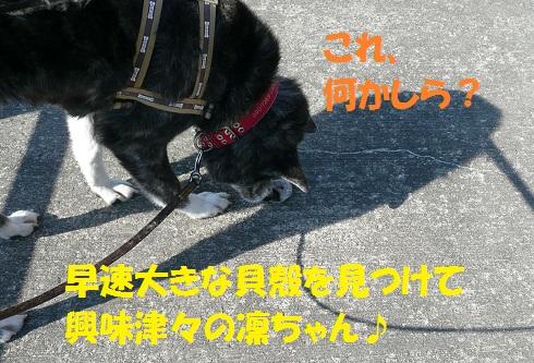 f0121712_0131383.jpg