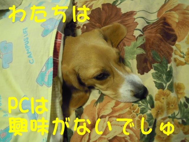 c0166622_9212672.jpg
