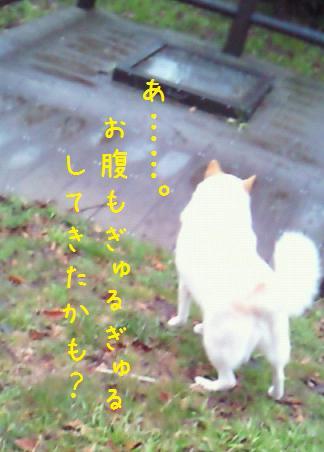 b0138430_19535785.jpg