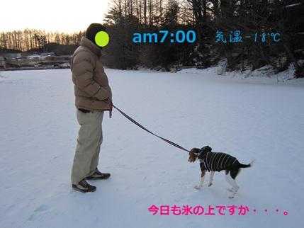 d0155853_17351540.jpg